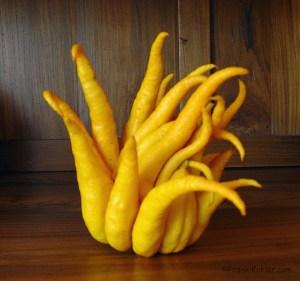 Buddha's hand 1