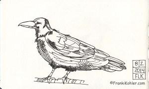 Raven sketch