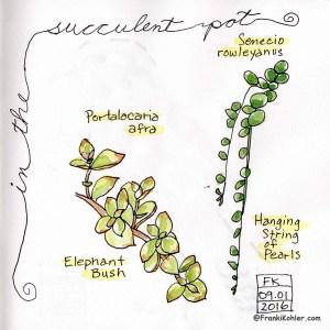 09-01-16 succulents