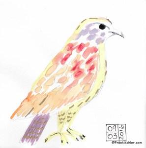 09-03-16 Hawk