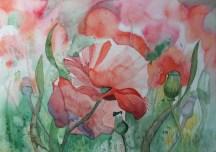 Mohnblüten (c) Aquarell von Frank Koebsch