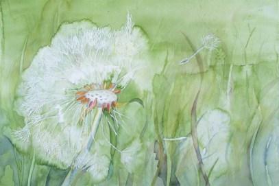 Pusteblume (c) ein Löwenzahn Aquarell von FRank Koebsch