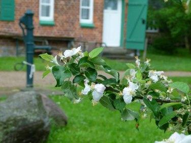 Obstblüte in Schwerin Mueß (c) Frank Koebsch (2)