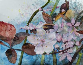 Blüten der Zierkirschen künden vom Frühling (c) Aquarell von Frank Koebsch