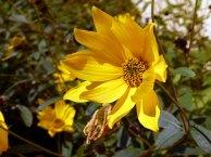 Blüten im Spätsommer (c) Frank Koebsch (1)