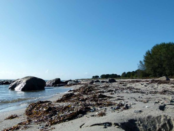 Spühlsaum am Strand von Thiessow (c) Frank Koebsch (3)