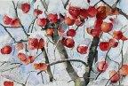 Winteräpfel (c) Aquarell von Hanka Koebsch