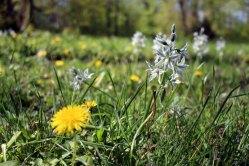 Frühling auf der Wiese im Schloßpark Griebenow (c) Frank Koebsch (2)