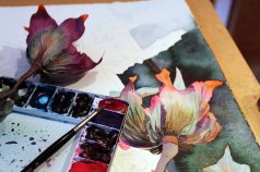 Die erste Blüte des Sebnitzer Flussteufels entsteht (c) Frank Koebsch (3)