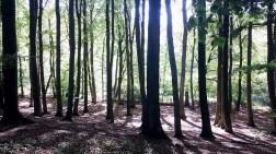 Buchenwald im Nationalpark Jasmund (c) Frank Koebsch (1)