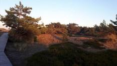 Abend über den Dünen am Darßer Ort (c) FRank Koebsch (2)