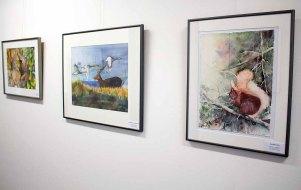 Einblick in unsere Ausstellung Wildes Land (c) Frank Koebsch (2)
