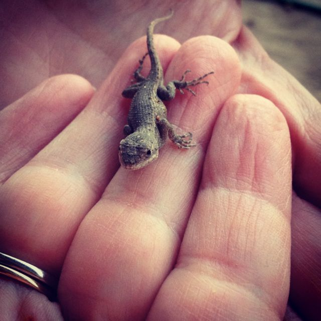 A Lizard in the Hand
