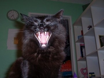 Frankly, Meow Dear . . . : I just gotta sing!