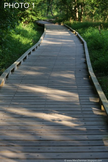 BOARDWALK PHOTO 1 (Mary Denman, Photographer)