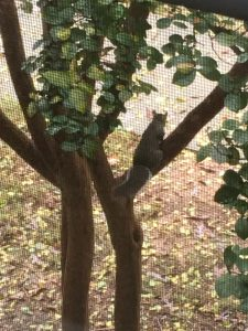 Frankly, My Dear . . . South Carolina Squirrel
