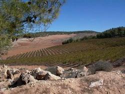 Yatir szőlő