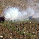 Wijngaarden in de winter van de Bourgogne