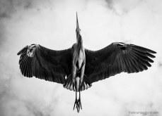 heron5