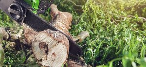 Tree Stump Removal Cost in South Miami , Stump Grinding Services | Miami Tree Company | Lawn Care , Tree Removal Near Palmetto Bay