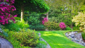 Lawn Services in Palmetto Bay