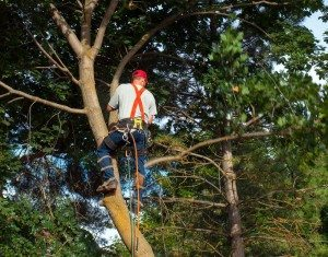 tree shaping , Tree Services Near Kendall