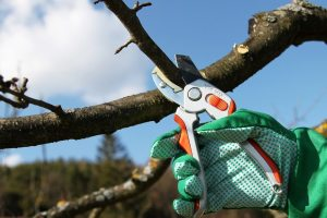 Best Tree Pruners in Coral Gables
