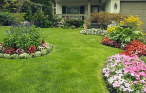 Landscape Maintenance , Lawn Maintenance in Miami