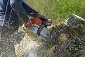Pinecrest Stump Grinding Prices
