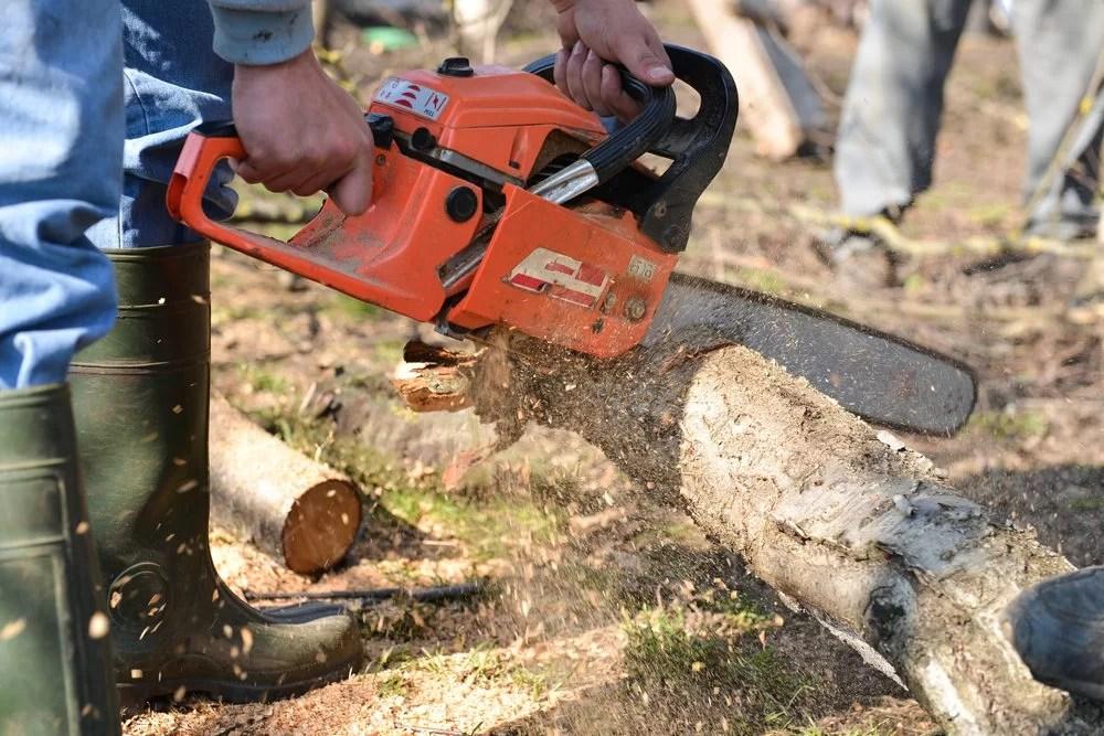 Miami Tree Removal Services