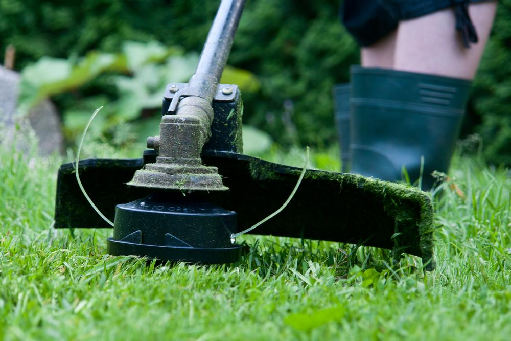 Yard Treatment Services in Miami