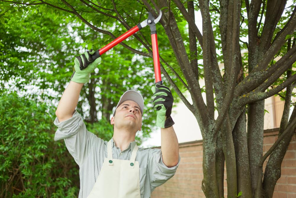 Best Tree Trimming Company in Miami , Tree Shaping