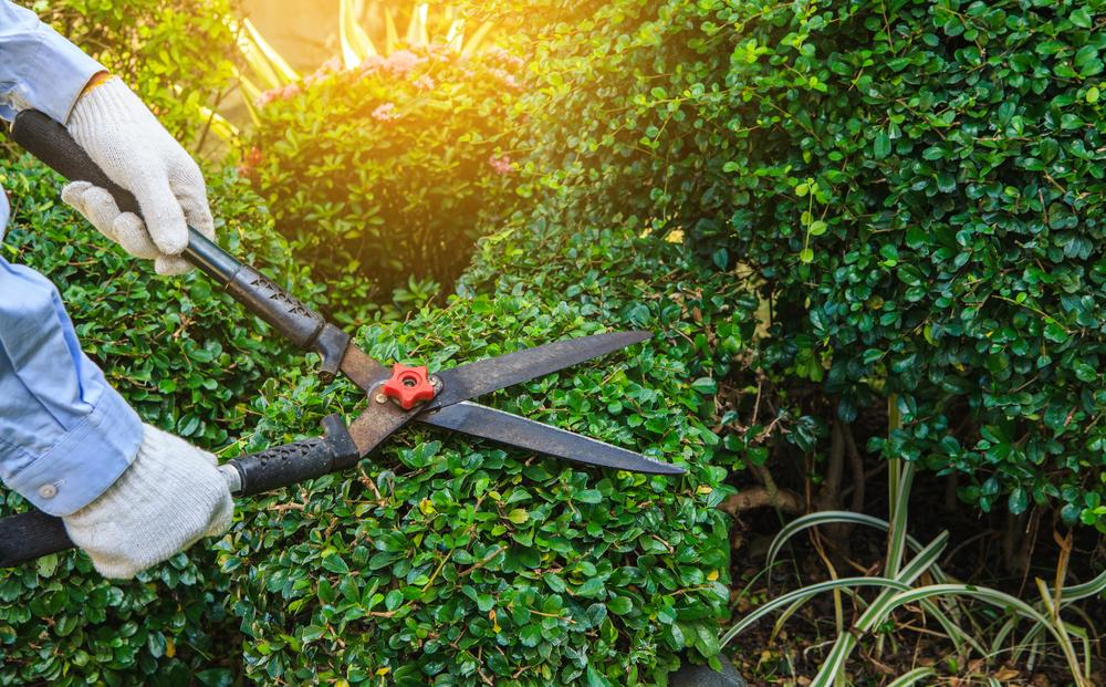 Best Commercial Lawn Services in Miami