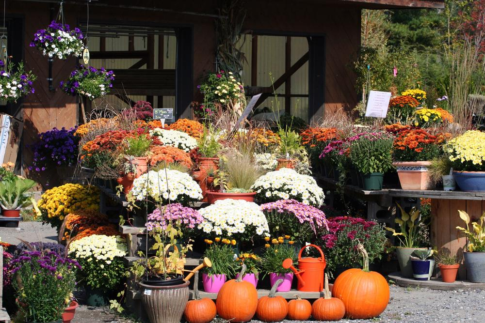 Best Plants for Fall