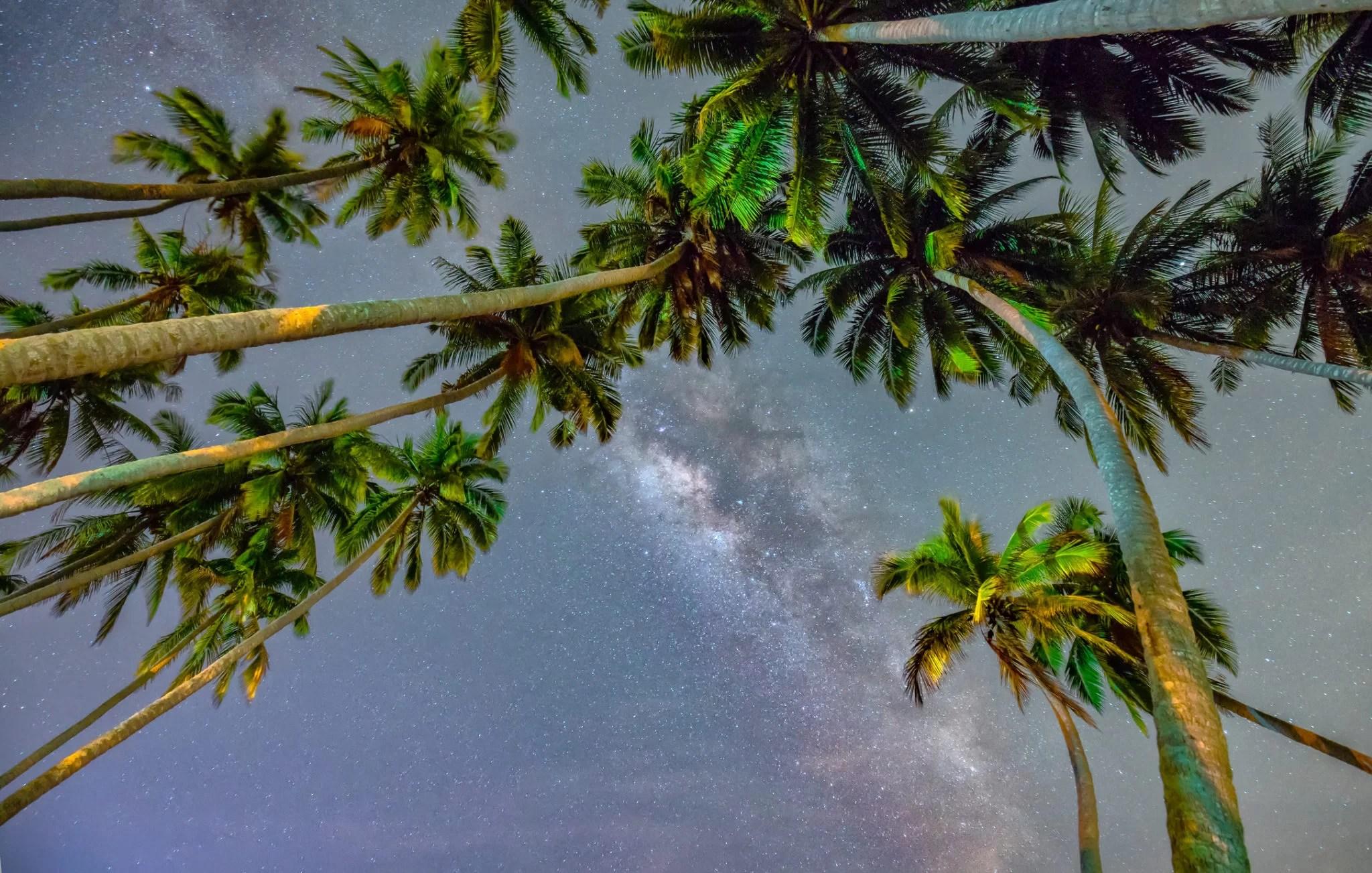 palm tree specialist
