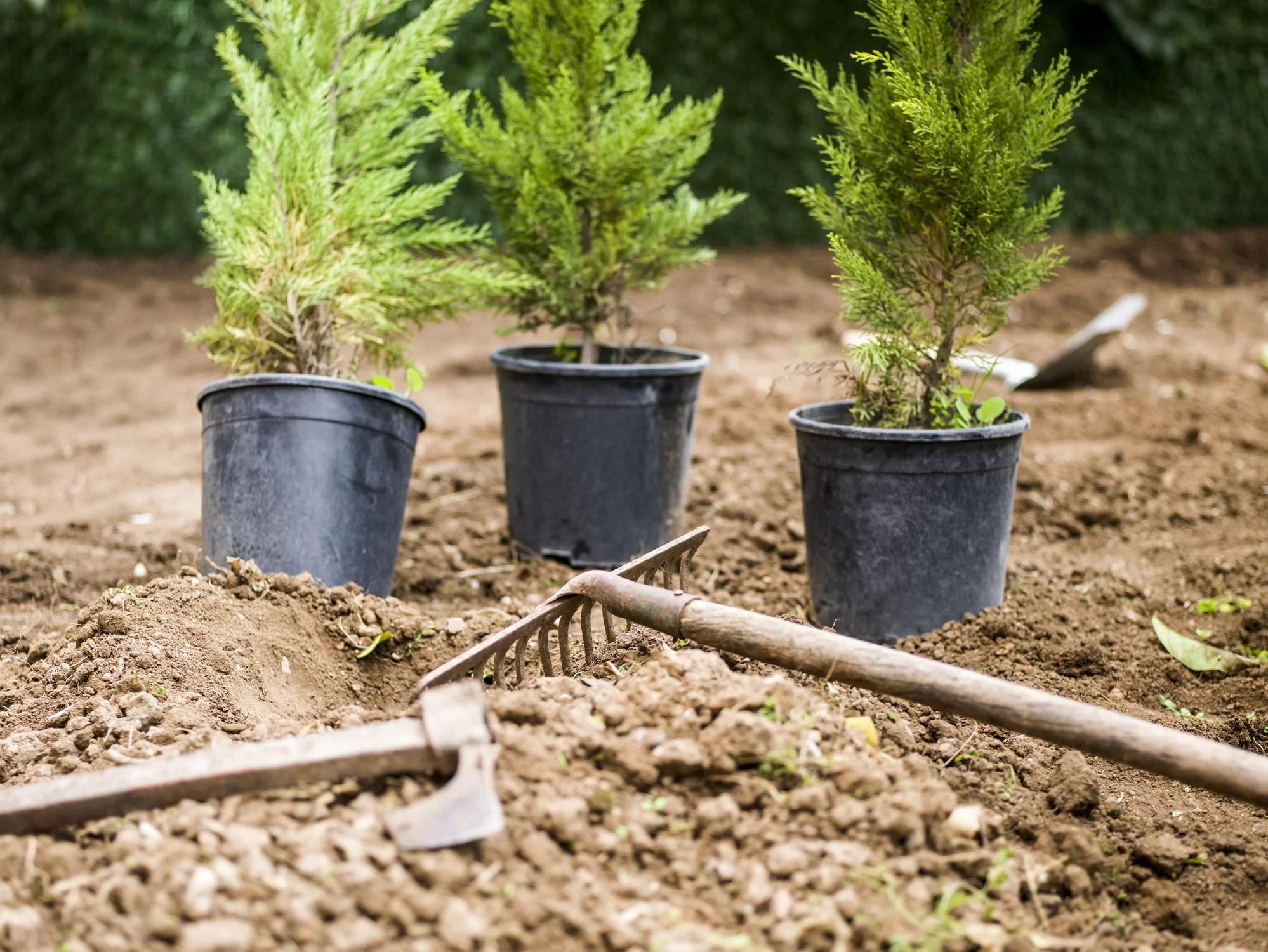 Professional Plant Installation