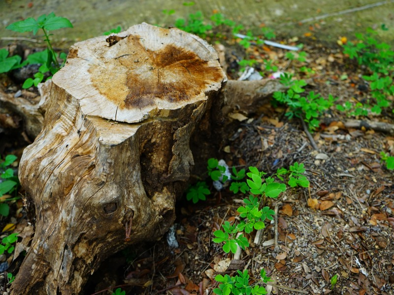 Stump Removal Service in Palmetto Bay