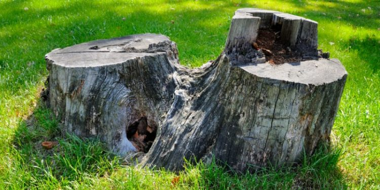 Tree Stump Removal Cost in Miami
