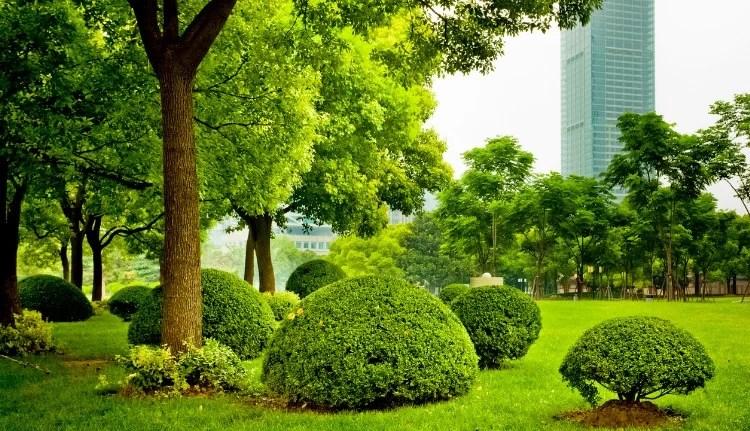 Commercial Landscape Maintenance in Miami
