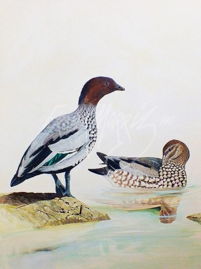 (278) Wood Ducks 71x61 cm