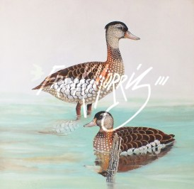 (Y802) Spotted Whistling-Ducks 61x61 cm $800