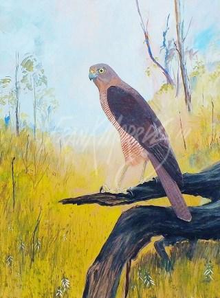 (b) Brown Goshawk 91 x 69 cm SOLD