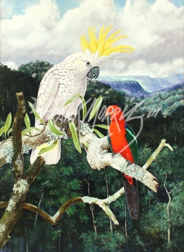(Y395) 84 x 62 cm A Chance Encounter (White Cockatoo and King Parrot)