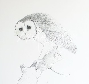 (PD6) Masked Owl 76 x 51 cm $60