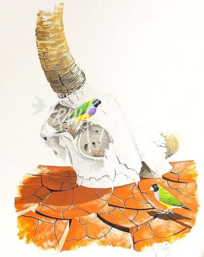(Y361) Gouldian Finches 70 x 50 cm