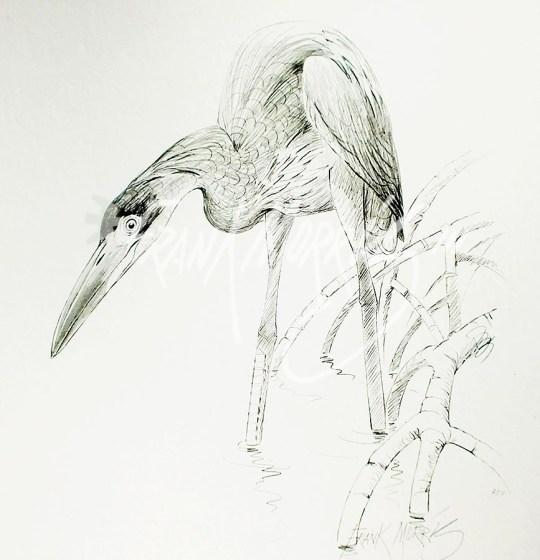 (PD11) Great-Billed Heron 76 x 51 cm $60