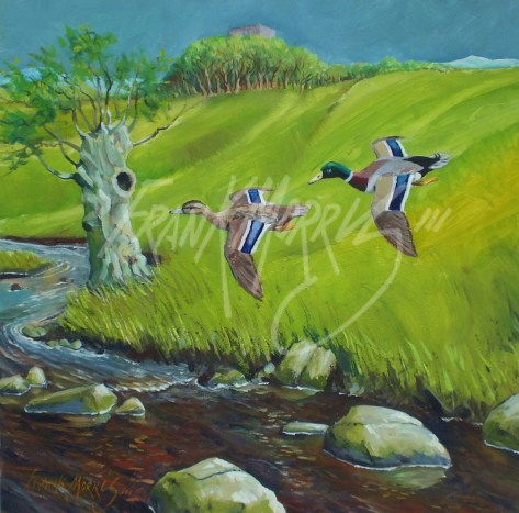 (Y793) Mallards below Mearns Castle 30x30 cm $300