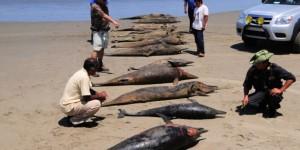 peru_dolphin_deaths-630x419