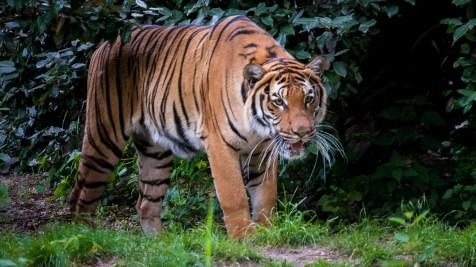 fn_20130611_zoo_2_133_web