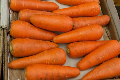 Dicke Karotten